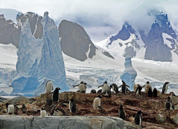 Auf Wiedersehen Antarktis!