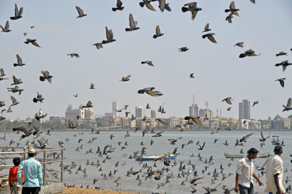 Die Vögel Teil Zwei, Mumbai, Indien