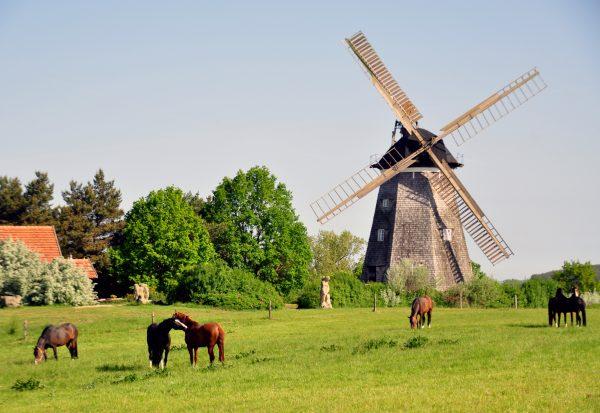 Die Holländer Windmühle auf Usedom