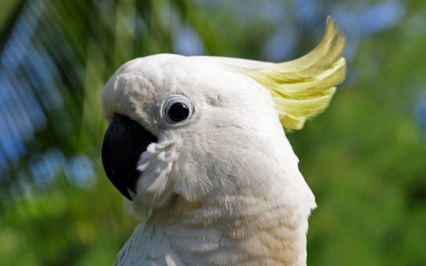 Der Papagei der North Beach Cottages