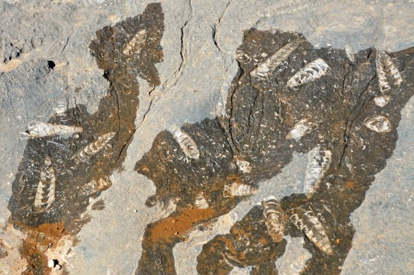 Fossilienfunde im Oman