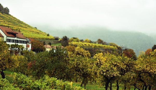 Weinberge in Weissenkirchen