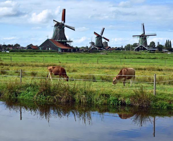 Windmühlen im Freilichtmuseum Zaanse Schans