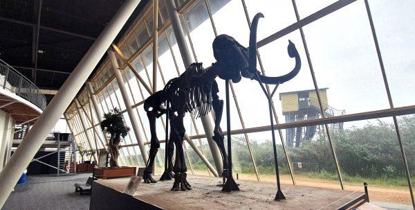 Ein Dinosaurier im Deltapark Neeltje Jans