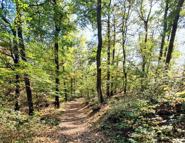 Wandern in der Nähe der Bergstation der Seilbahn in Boppard