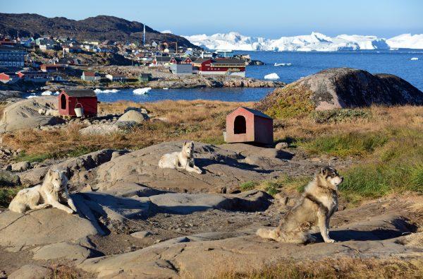 Hundies vom Arctic Hotel in Ilulissat