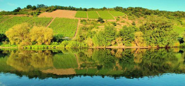 Spiegelungen auf dem Rhein
