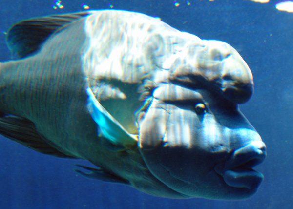 Ein toller Fisch im Aquarium von Noumea