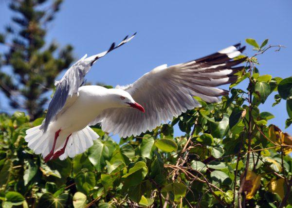 Auf der Ile aux Canards (Duck Island)