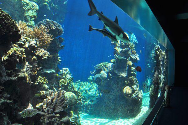 Das Aquarium von Noumea
