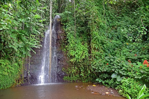 Der Vaipahi Wasserfall auf Tahiti
