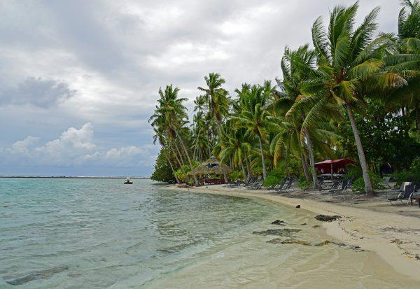 Palmen und Strand auf Taha'a