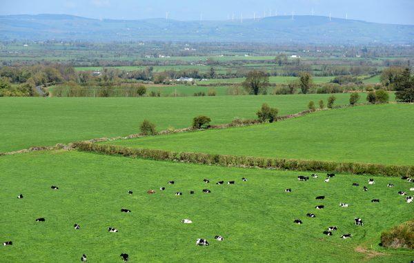 Irische Landschaft beim Rock of Cashel