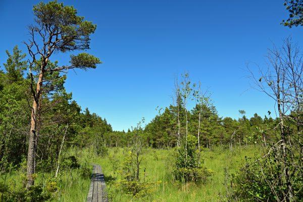 Naturschutzgebiet Viidumäe / Estland