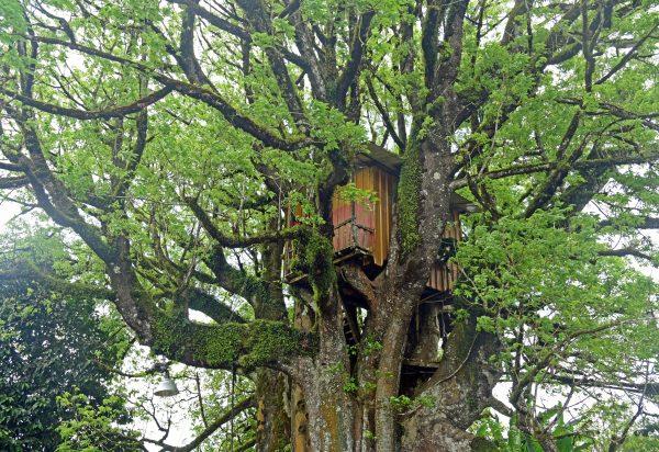 Ein Baumhaus in San Cristobal