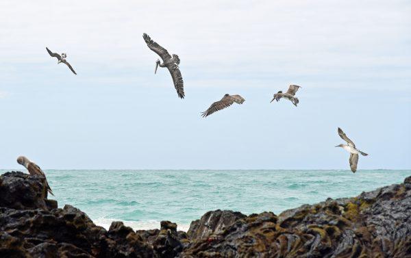 Vögel auf Galapagos