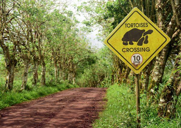Warnung vor der Schildkröte im Reservat 'El Chat'
