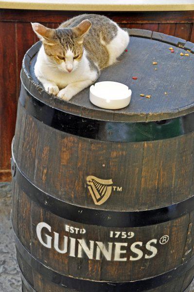 Ein Kätzchen im Irish Village / Dubai