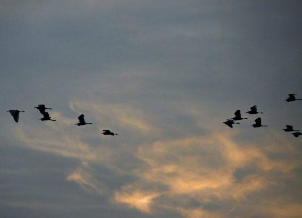 Vögel am Himmel des River Kwais