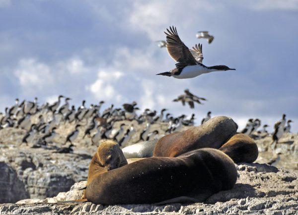 Vögel und Robben im Beagle Kanal