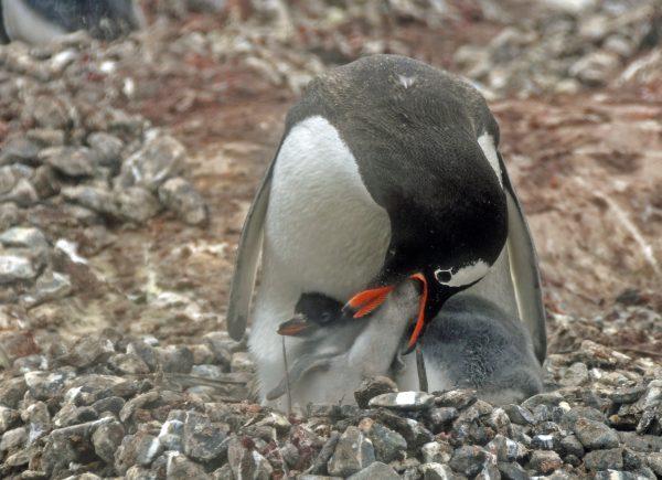 Papa füttert sein Baby / Jougla Point