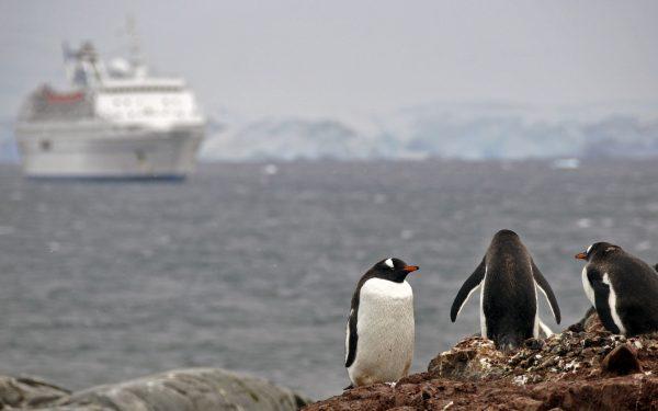 Pinguine am Jougla Point