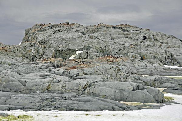 Pinguine auf der Petermann Insel
