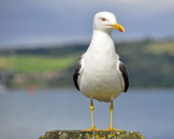 Auf der Insel Inchcolm nahe Edinburgh