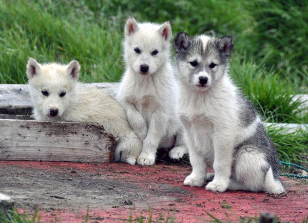 Drei Freunde in Sisimiut