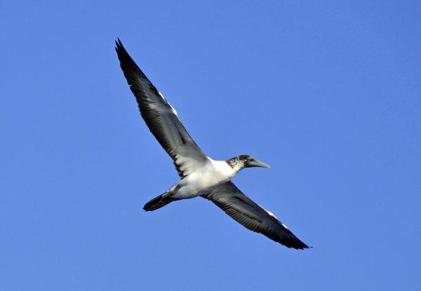 Ein Vogel mitten im Atlantik