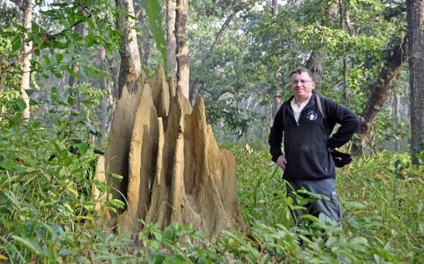 Zinni im Chitwan Nationalpark