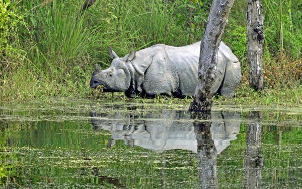 Im Chitwan Nationalpark (Rhino 1)