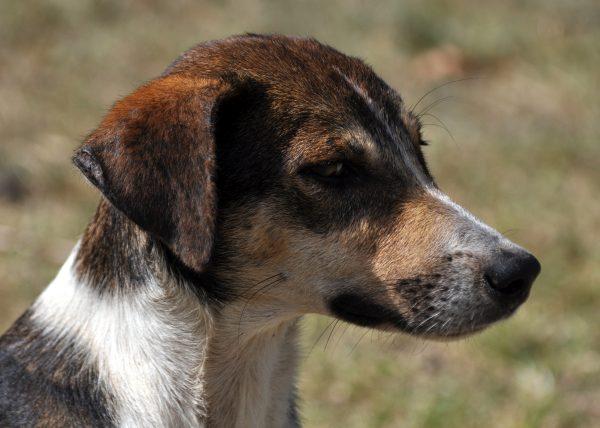 Ein Fidschi Hundie