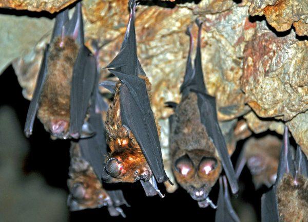 Fledermäuse in einem Höhlentempel