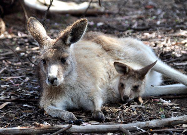 Im Tasmanian Devil Park
