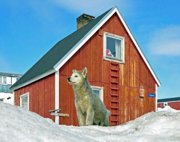 Hundi bewacht sein Heim
