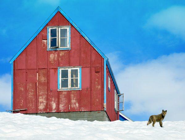 Hund, Schnee und Haus