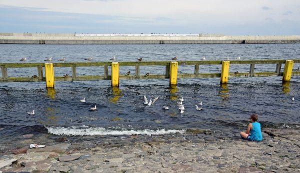 Vögel versenken in Gdingen
