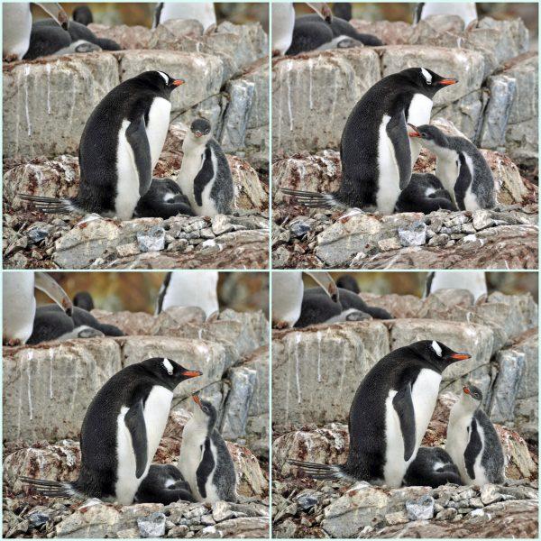 Mama, ich habe dich lieb!