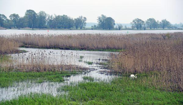 Die Oder in Groß Neuendorf