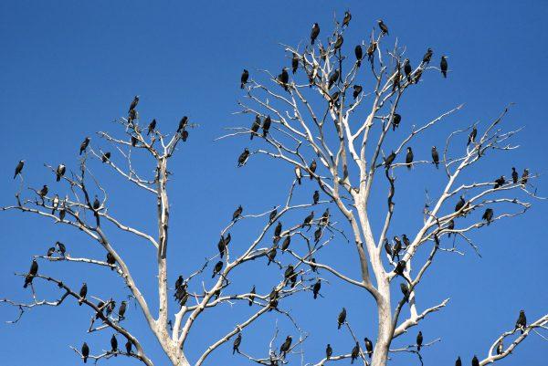 Vögel im Kopacki Rit
