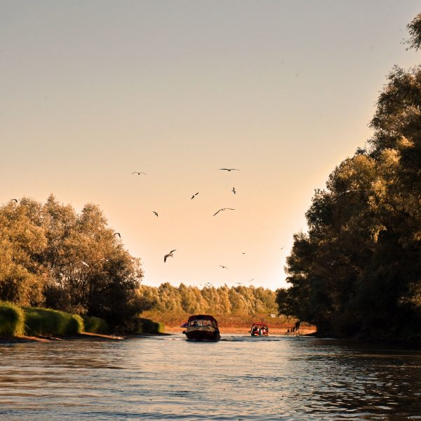 Vögel im Donau-Delta