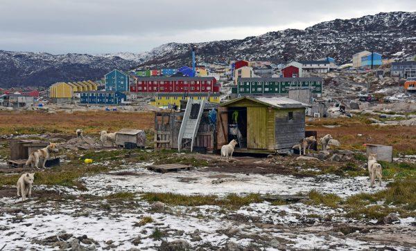Huskys in Ilulissat
