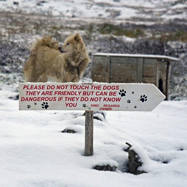 Warnung vor den Hunden, Ilulissat