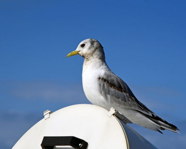 Vögel beobachten auf der MS Silver Cloud