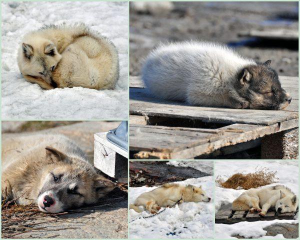Hundies sind müde wie der Zinni auch