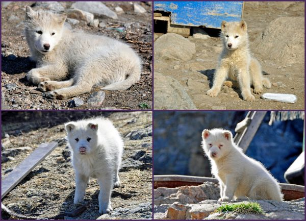 Abschied von meinen grönländischen Freunden