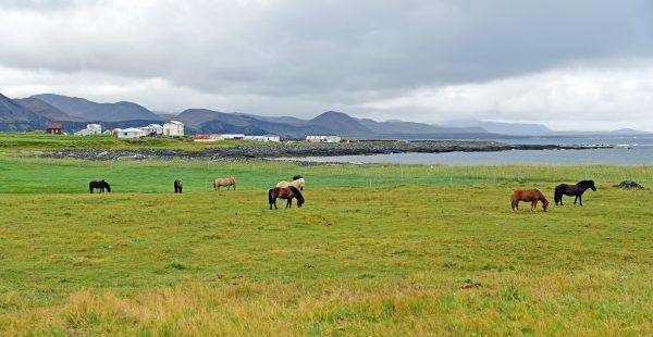 Die Umgebung von Grundavik auf Island