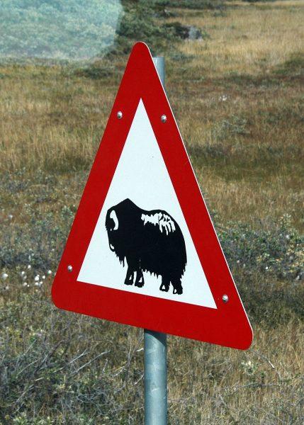 Warnung vor dem Moschus-Ochsen
