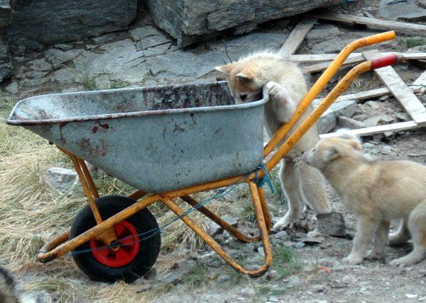 Hundi mit Hunger